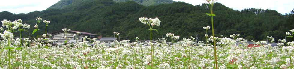 青木村風景4